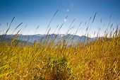 picture of olympic mountains  - Hurricane Ridge in the Olympic Peninsula - JPG