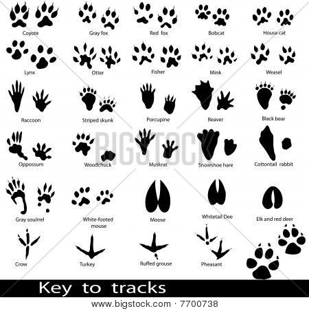 Collection of animal and bird trails