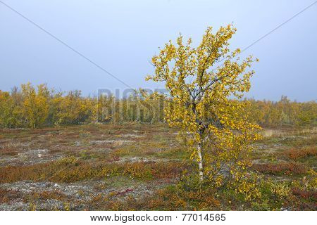 Colorful autumn, fall leaves in the taiga forest.