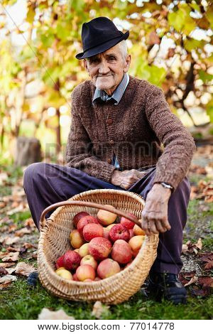 Senior Farmer With Apples