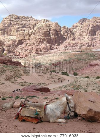 Valley In Petra