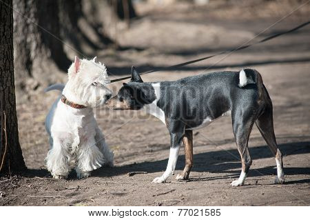 Two Dogs Talk