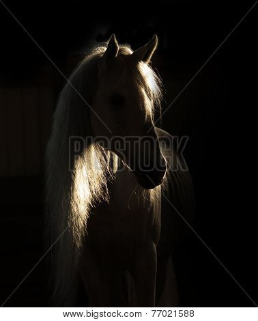 Horse In Shadow