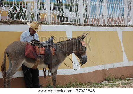 An Old Man with its donkey
