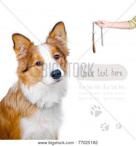 Card With Border Collie