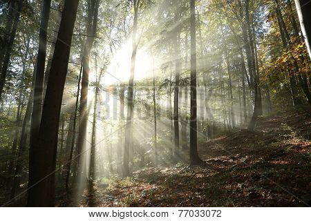 Autumn forest at dawn