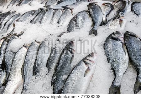 Fresh Fish Carcasses Lie On Ice Crumbs