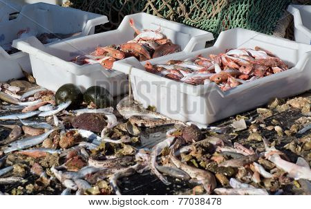Seafood catch
