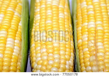 Three Fresh Sweet Corns