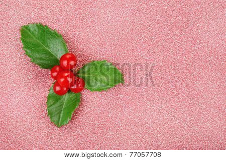 European Holly (Ilex aquifolium) with berries on pink background