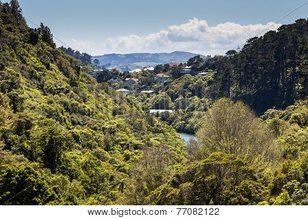 The New Zealand Native Bush And Lake
