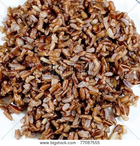 Germinated Wheat Grains As Background