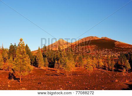 Parque Nacional de la Corona Forestal, Teide, Tenerife, Canary Islands, Spain