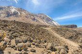 stock photo of kilimanjaro  - Great Penck and Little Penck Glaciers on the Kibo cone - JPG