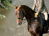 stock photo of horse-riders  - Horse riding - JPG