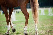 stock photo of  horse  - horse legs on a training center for horses - JPG