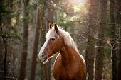 picture of paint horse  - horse in the forest in sunny day - JPG