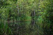 picture of marsh grass  - marsh with grass more plants and birch - JPG