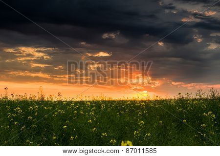 sunset in yellow rapeseed field