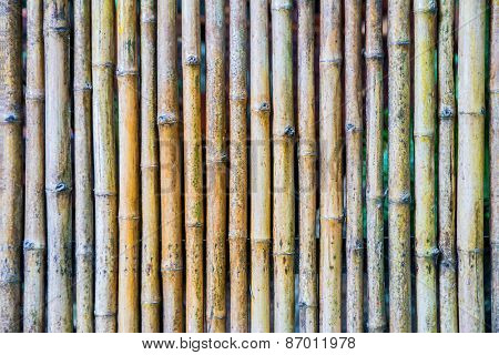 Natural bamboo background.