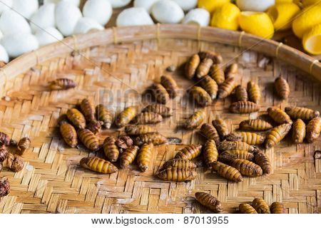 Yellow Chrysalis Silkworm ,silk Worm Cocoon.