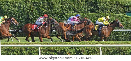 Turf Race