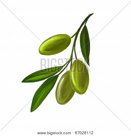 olives on branch vector illustration    painted watercolor