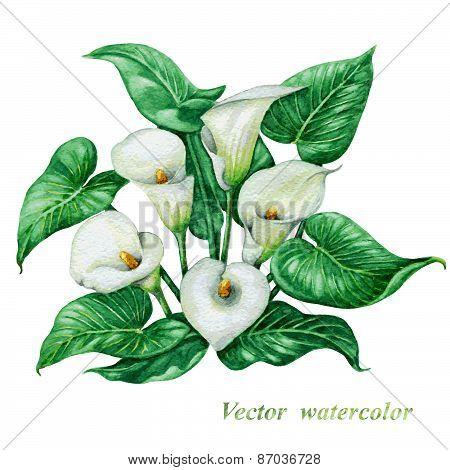 White  Calla Lilies Bouquet