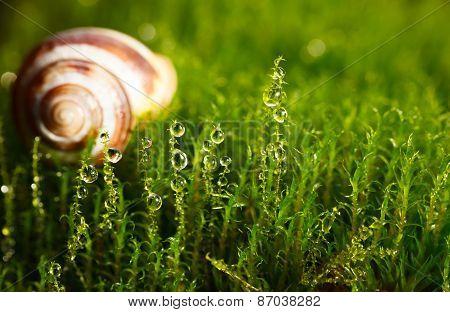 Shell In Moss