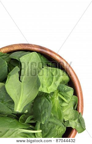 Green Spinach Leave