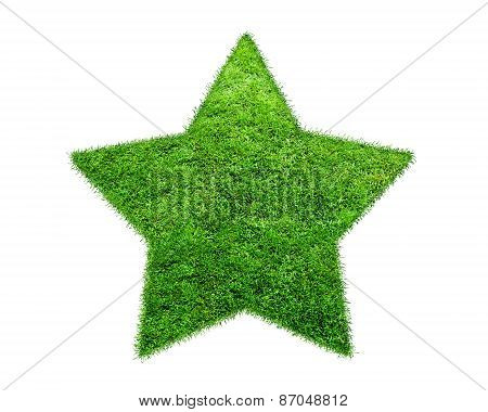 The Green Grass Star On White Background