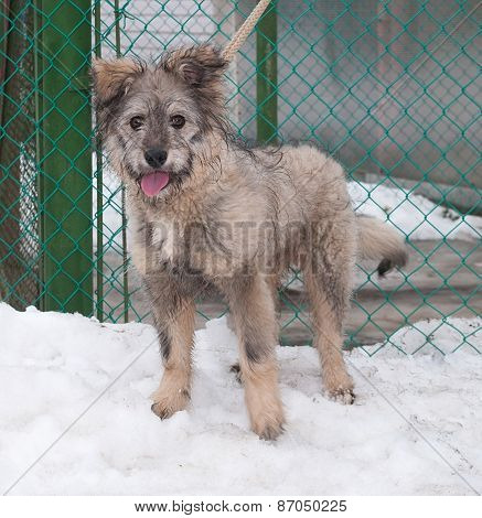 Gray Shaggy Dog Standing On Ice