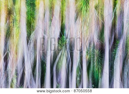 Yucca Tree Abstract