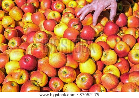 Many red apples for sale