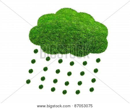 The Green Grass Cloud With Drops