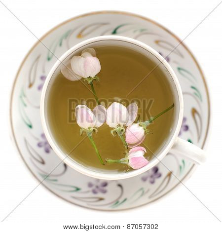 Apple Blossom Tea In White Cup Isolated