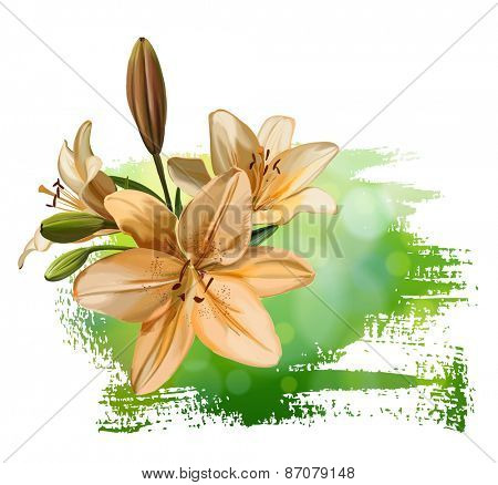 Lily flower on green background
