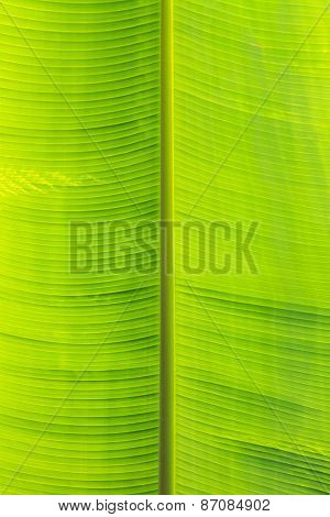 Palm Tree Green Leaf