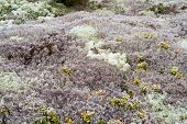 picture of lichenes  - Beautiful background image of lichen and moss - JPG