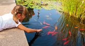 stock photo of fish pond  - Little girl plays with ornamental fish that swim in a pond - JPG