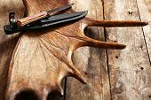 pic of antlers  - Moose antler with hunting knives on wooden background - JPG