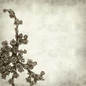 pic of rosettes  - textured old paper background with dry rosette of Aizoon canariense canarian iceplant - JPG