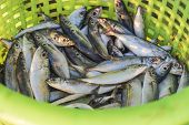 picture of fresh water fish  - Close up Fresh fish in plastic basket - JPG