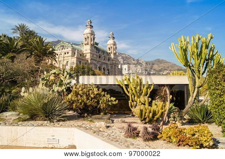 House And Cacti
