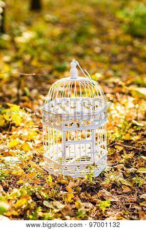 Vintage birdcage in the autumn park