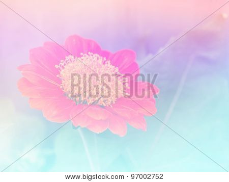 Abstract Blurry Zinnia Flower Colorful Background.