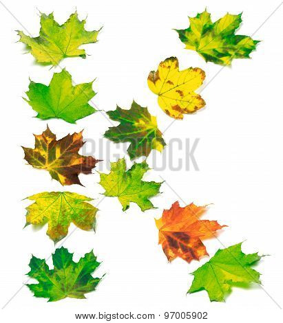 Letter K Composed Of Multicolor Maple Leafs