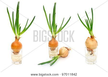 A Set Of Photos With Onion