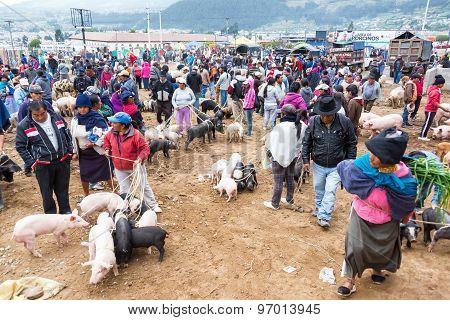 Otavalo Animal Market Activity