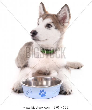 Cute Malamute puppy lying near metal bowl isolated on white